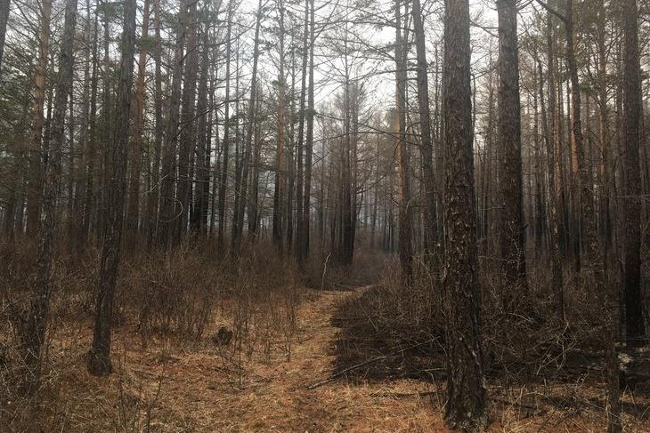 В Иркутской области введен полный запрет на посещение лесов