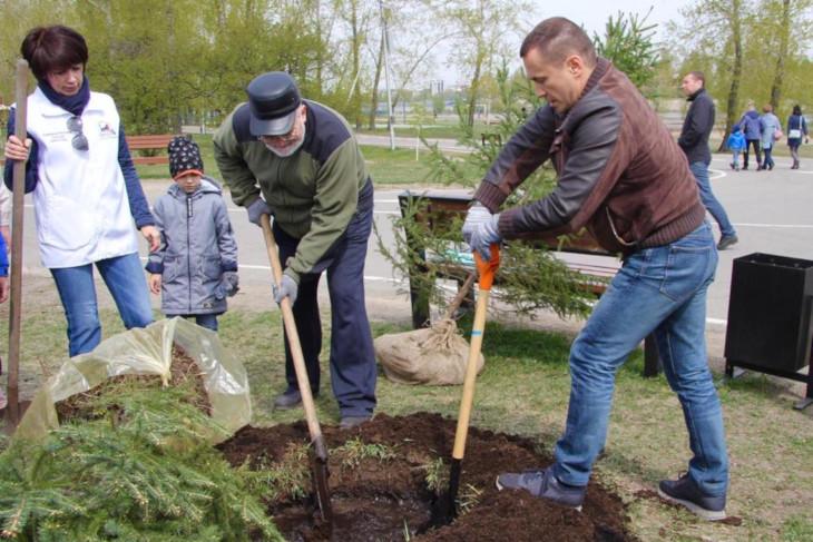 500 молодых деревьев высадили в Иркутске