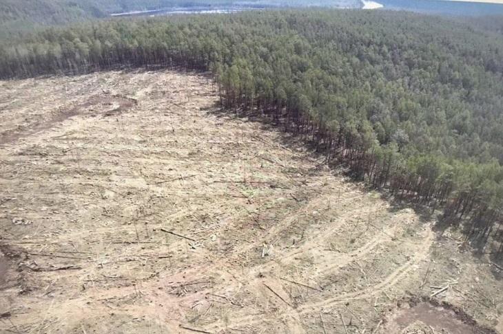 Арбитражный суд признал законной продажу древесины, вырубленной в заказнике «Туколонь»