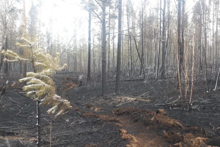 Муниципалитетам не хватает ранцевых огнетушителей для борьбы с пожарами