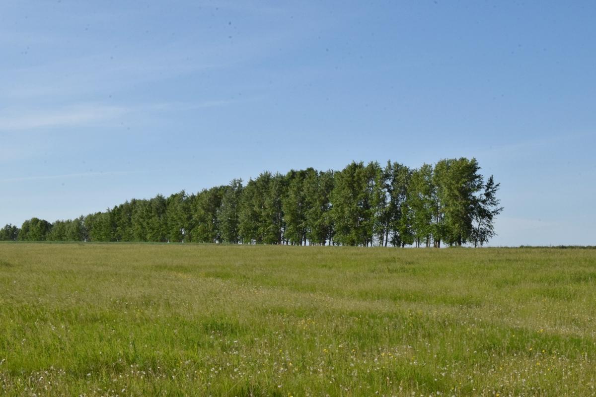 Власти Башкирии рассказали, почему затягиваются сроки предоставления семьям бесплатных земель