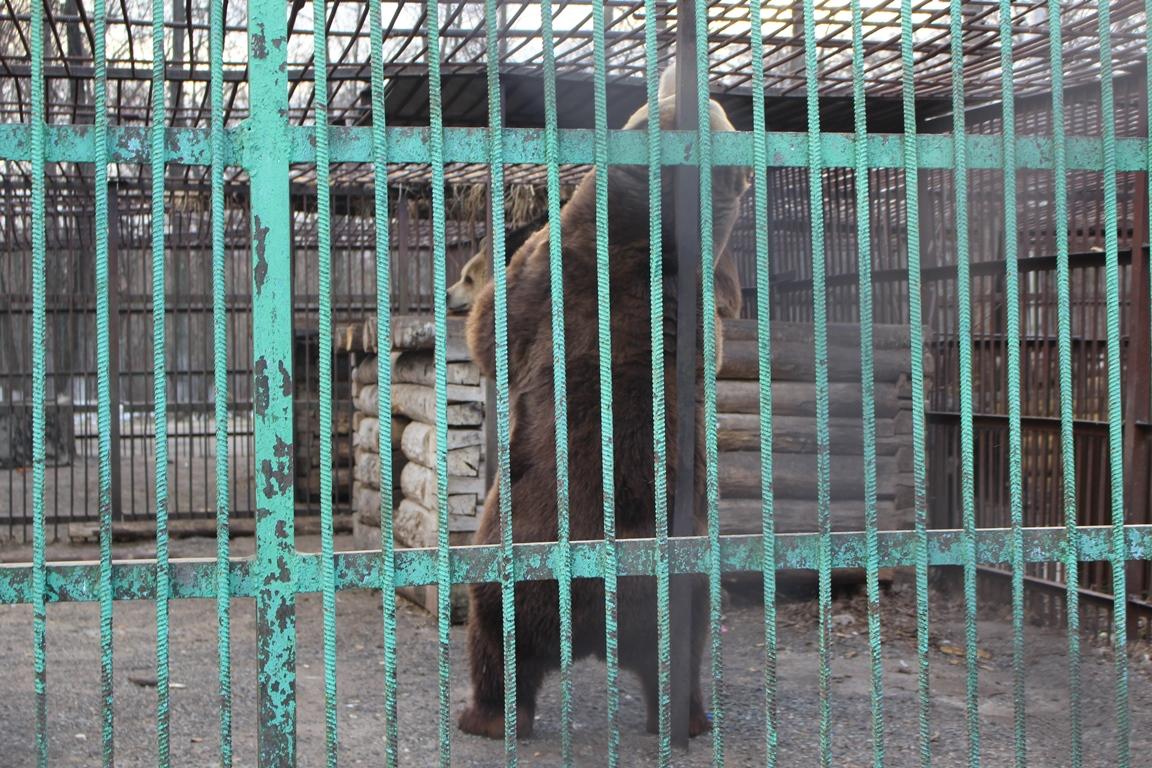 Житель Башкирии встретил на дороге медведя