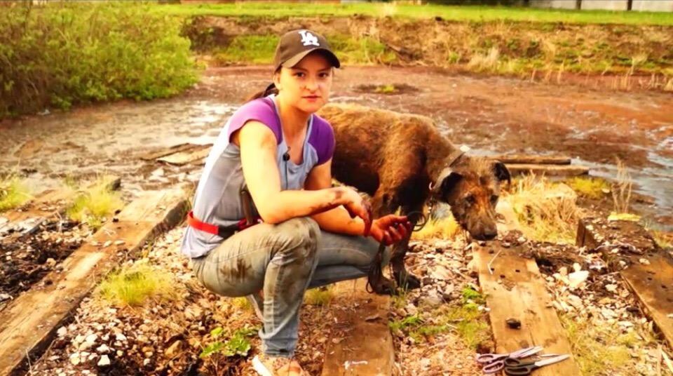 Зооволонтеры из Башкирии рассказали, как спасали собак из битумного озера