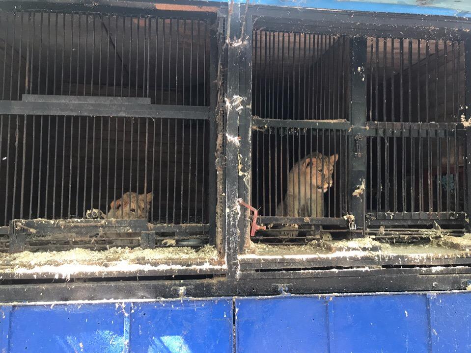 «Запах отвратительный, грязно, миллион мух»: Жителей Уфы возмутило состояние местного зоопарка