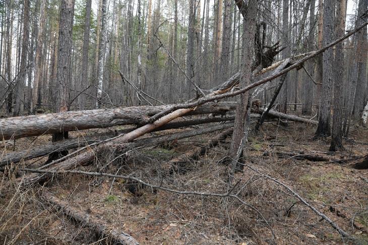 Сергей Левченко предложил депутатам посетить «Туколонь» для оценки состояния леса