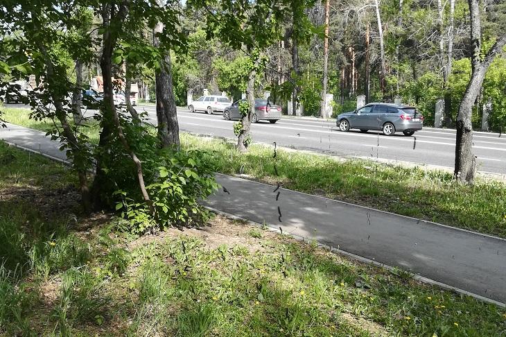 30 тысяч деревьев в Иркутске обработали против вредителей