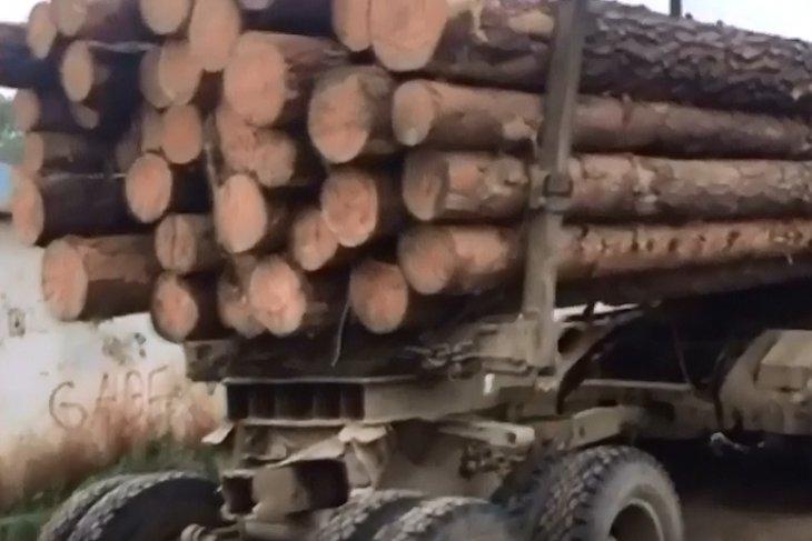 В Чунском районе полицейские задержали подозреваемых в вырубке леса на 2 миллиона рублей