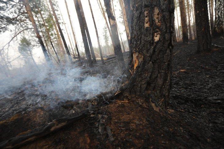 В Иркутской области действуют девять лесных пожаров