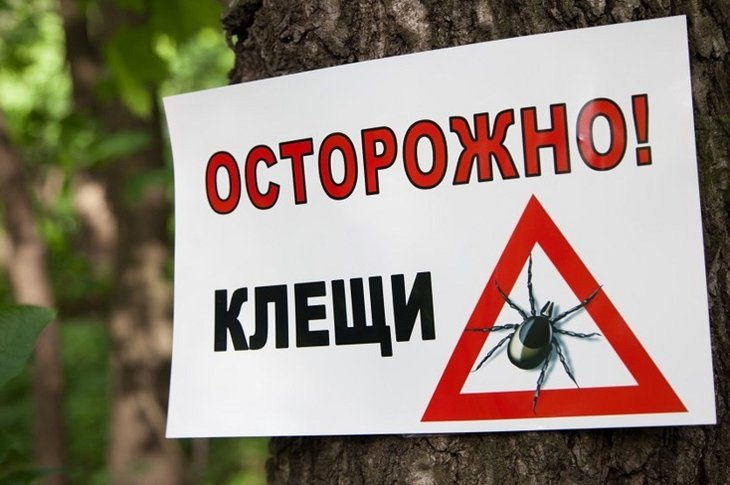 На 17% выросло количество укушенных клещами жителей Иркутской области в этом году
