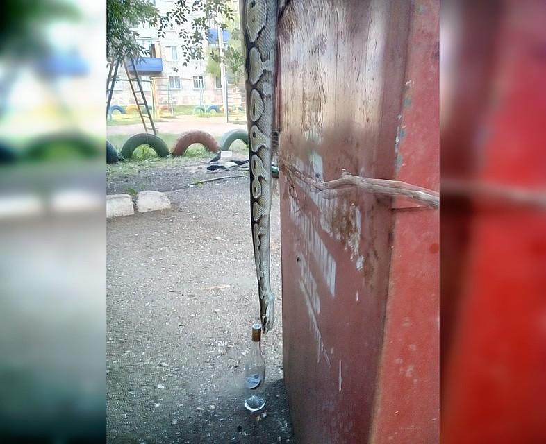 В Башкирии в мусорном контейнере нашли огромную змею