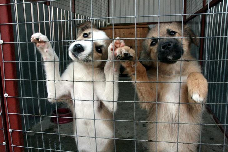 Приюту для животных в Иркутске нужны еда и медикаменты