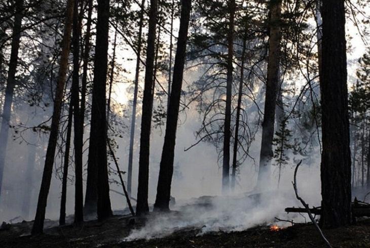 Президент РФ поручил проверить использование леса в районах Иркутской области, где произошли пожары