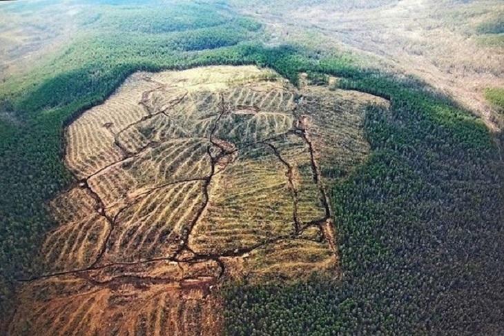 Суд признал незаконной санитарную рубку реликтовых лесов заказника «Туколонь»