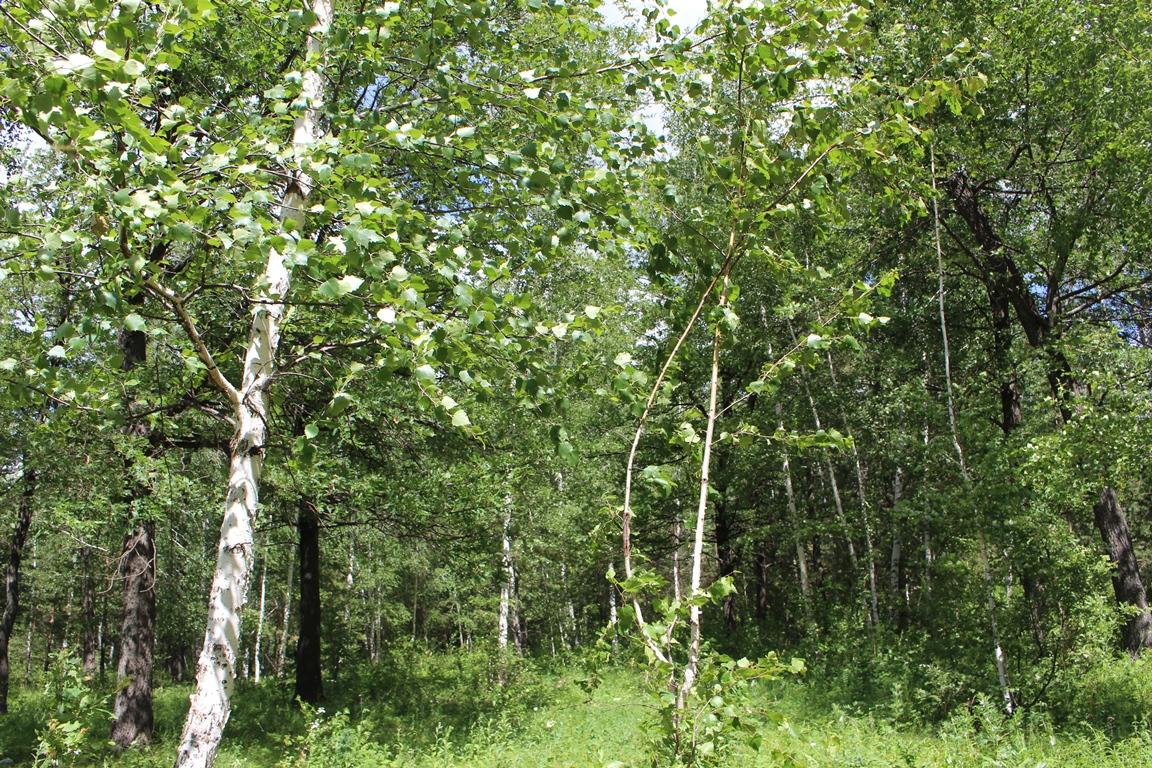 Житель Башкирии незаконно спилил деревья, чтобы топить баню
