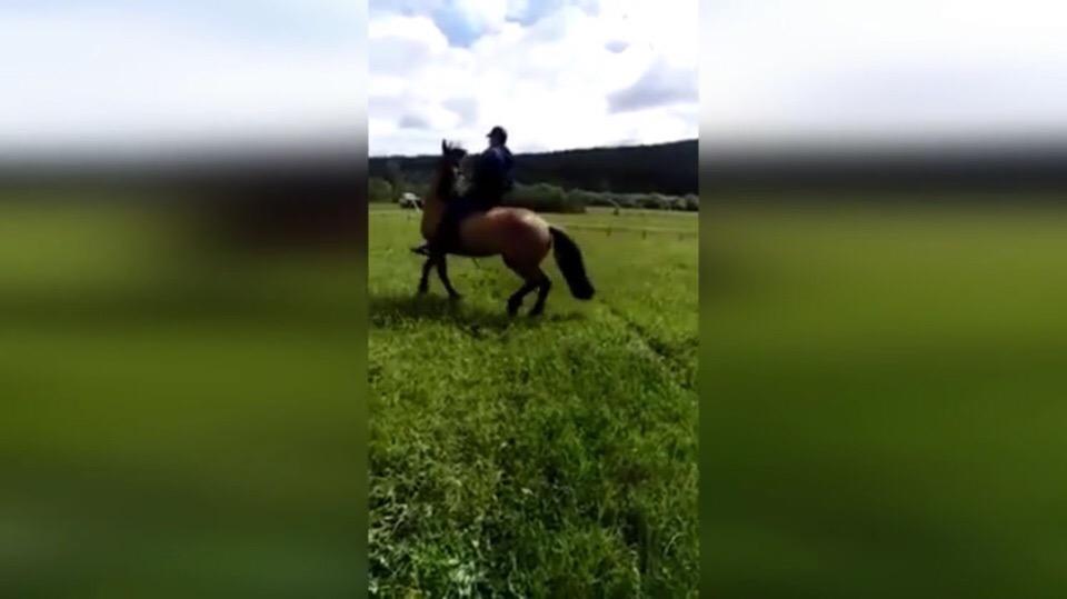 Видео: На сабантуе в Башкирии лошадь станцевала под народную плясовую музыку