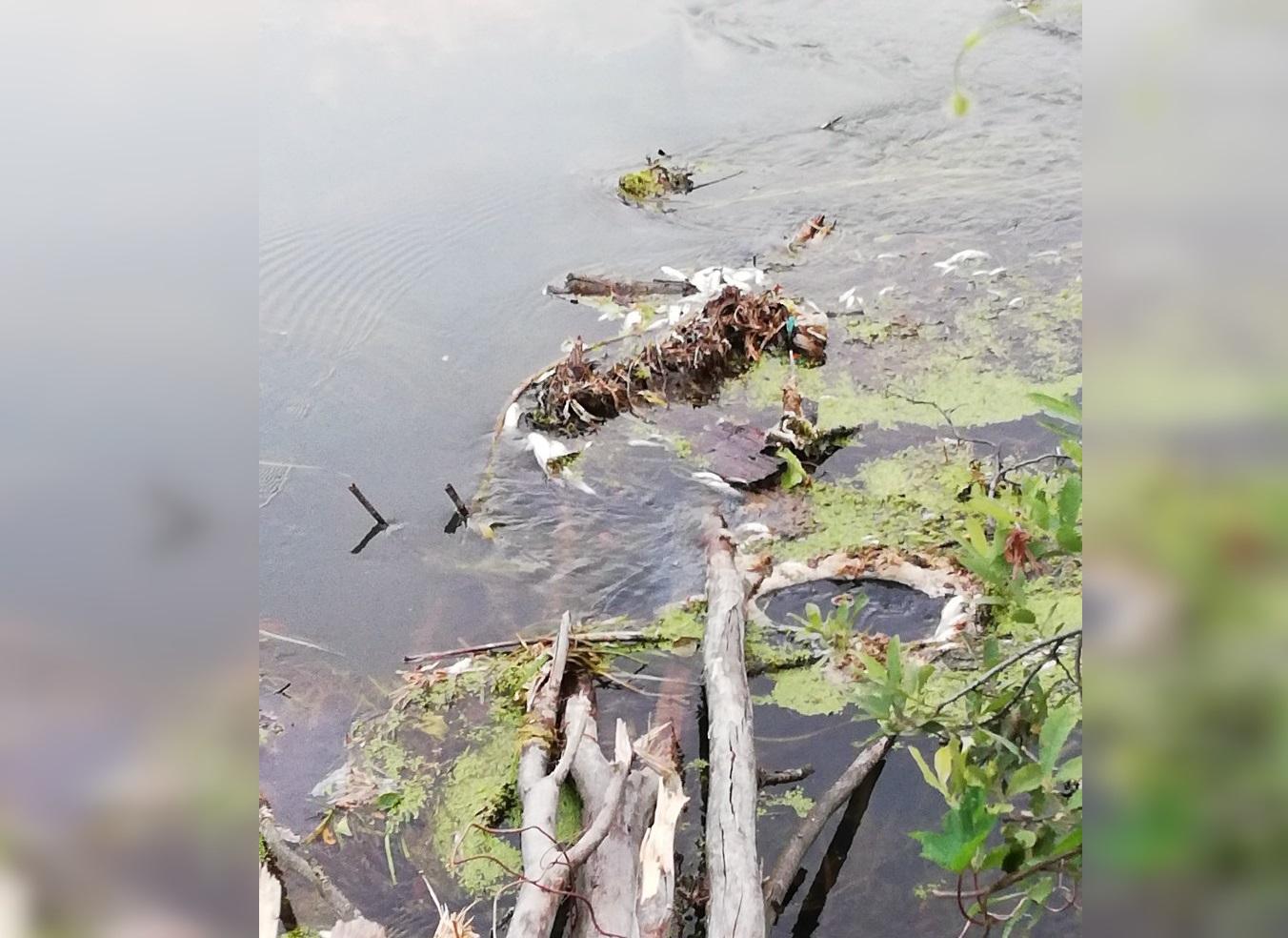 В одной из рек Башкирии массово гибнет рыба – Местные жители бьют тревогу