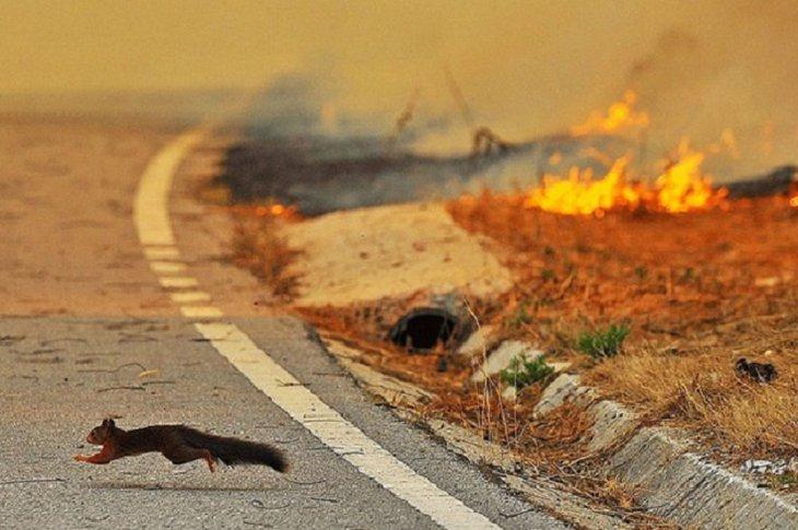 Иркутские власти не зарегистрировали случаев гибели диких животных во время пожаров