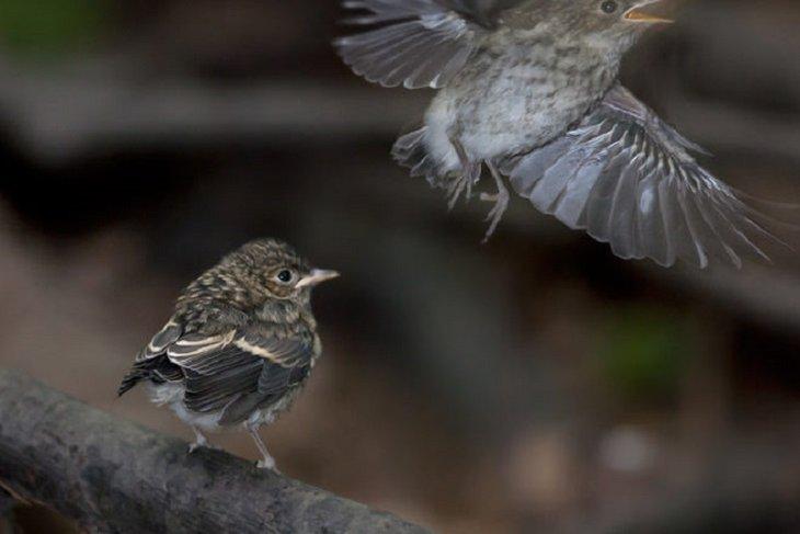 80% потомства птиц погибли из-за дождей и дыма от пожаров в Сибири
