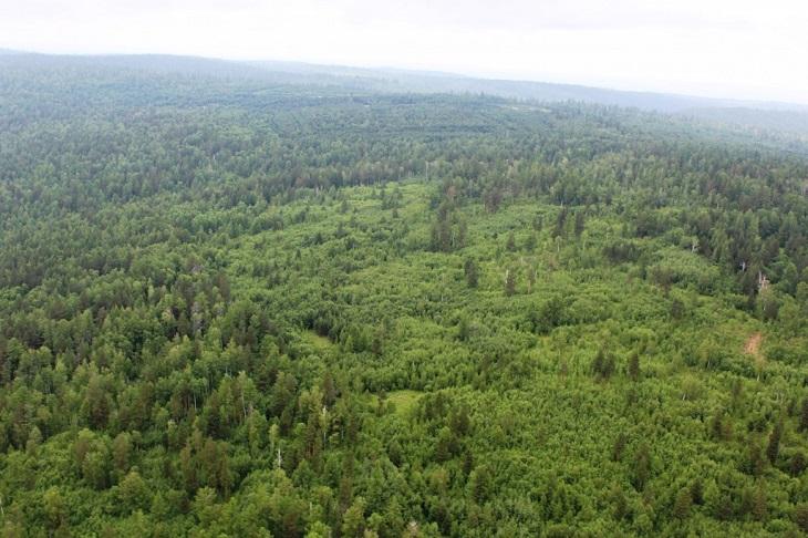 В лесах Иркутской области отменили режим чрезвычайной ситуации