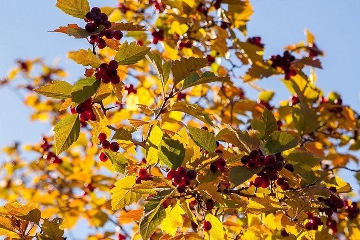 Синоптики рассказали, каким будет сентябрь в Иркутской области