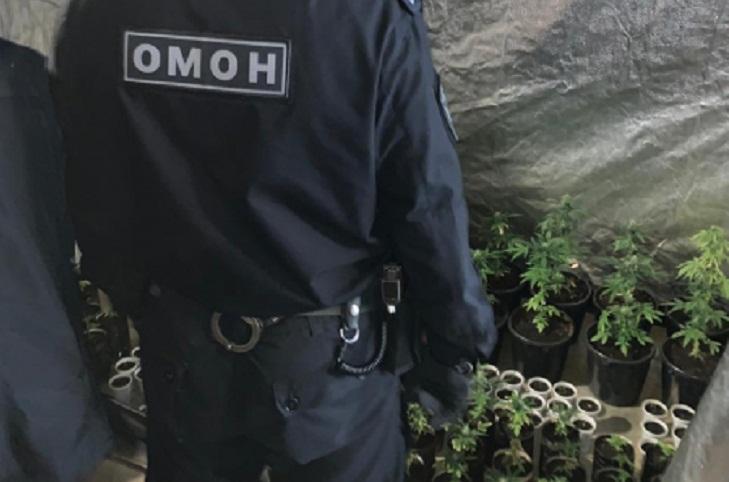 В Усолье-Сибирском полицейские изъяли у наркосбытчиков 195 кустов конопли и 3 килограмма марихуаны