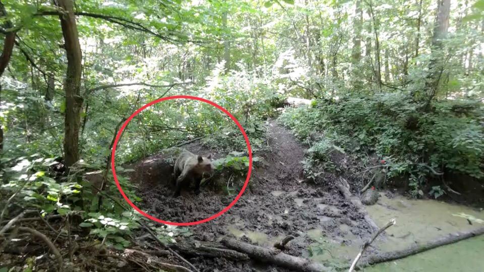 В Башкирии в объектив фотоловушки попал медведь