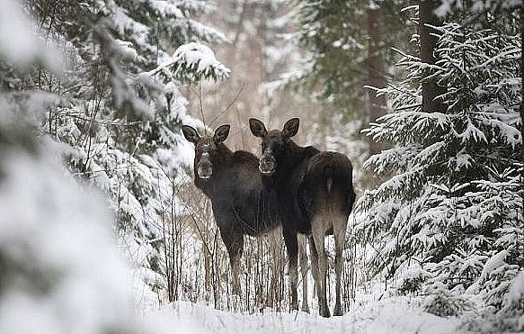 В Башкирии утвердили лимиты для охотников