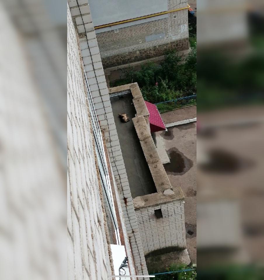 В Башкирии неизвестные сбросили собаку с балкона многоэтажки