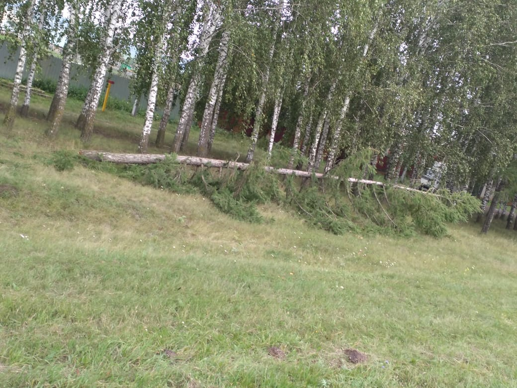 В одном из сел Башкирии вырубают лесополосы – Местные жители забили тревогу