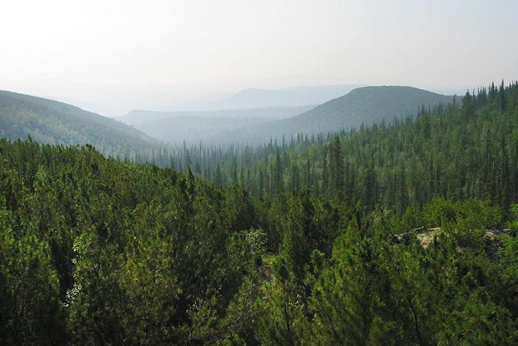 50 человек пропали в лесах Иркутской области в 2019 году