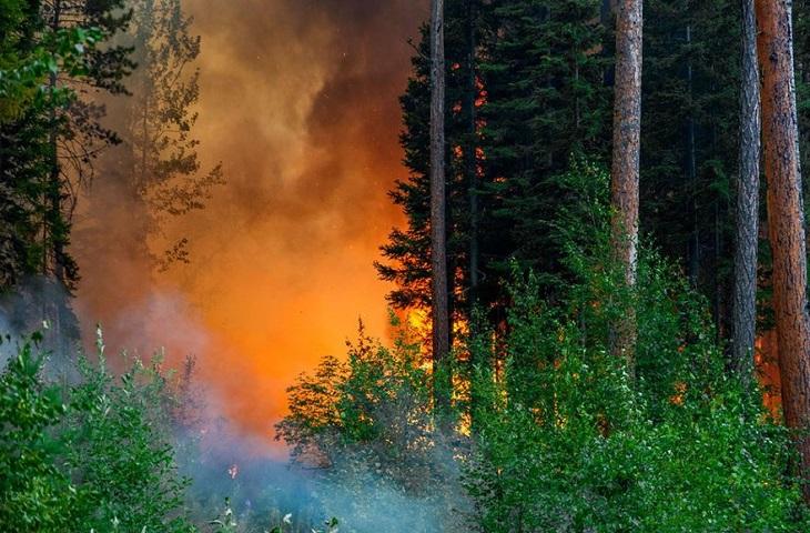 Депутат Госдумы попросил признать работу Рослесхоза неудовлетворительной из-за лесных пожаров