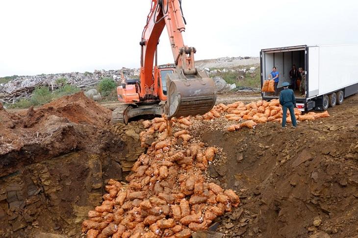 В Иркутске уничтожили 20 тонн зараженного картофеля из Китая
