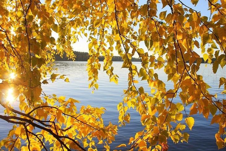 До +18 градусов ожидается в Иркутске 6 сентября