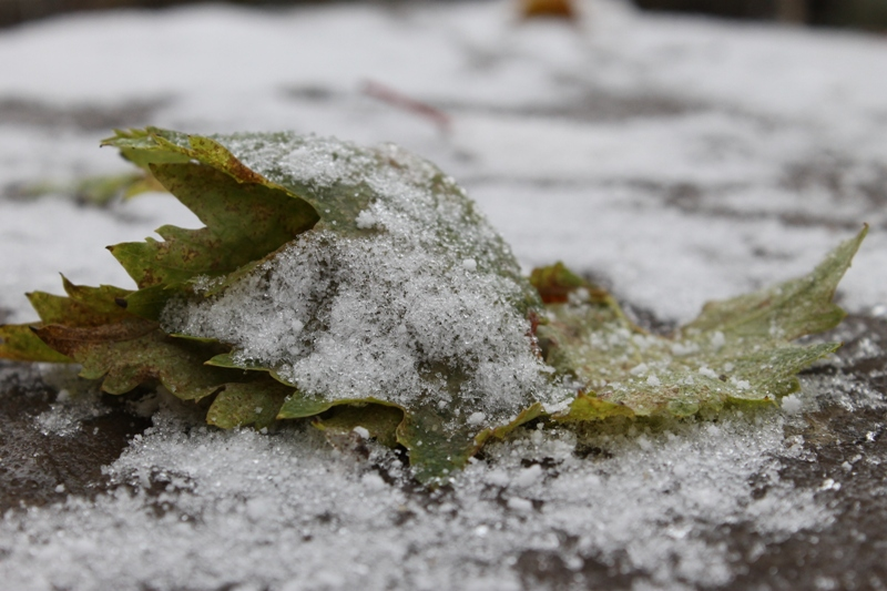 В Башкирии ожидается снег с дождем