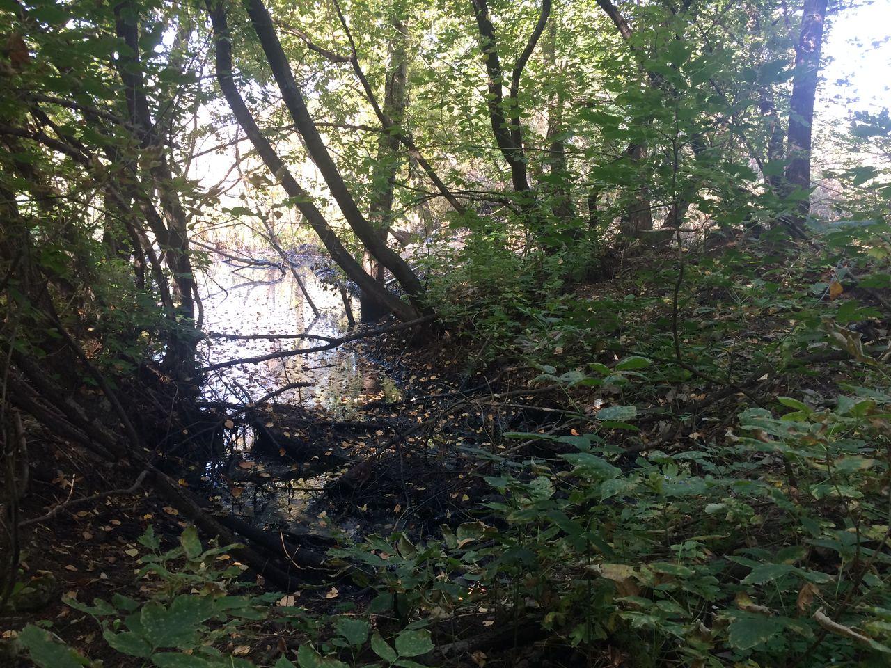 В Уфе в лесу нашли пятно мазута размером с озеро
