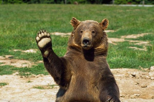 Видео: В Башкирии возле остановки бегал медведь