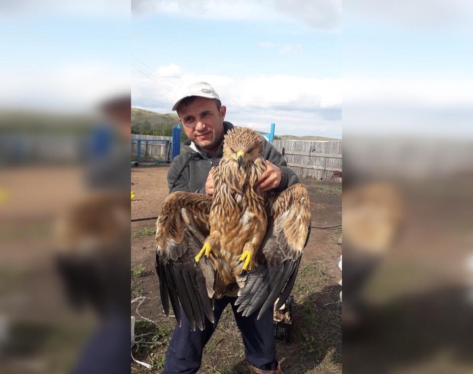 В Башкирии семейная пара спасла раненого орла