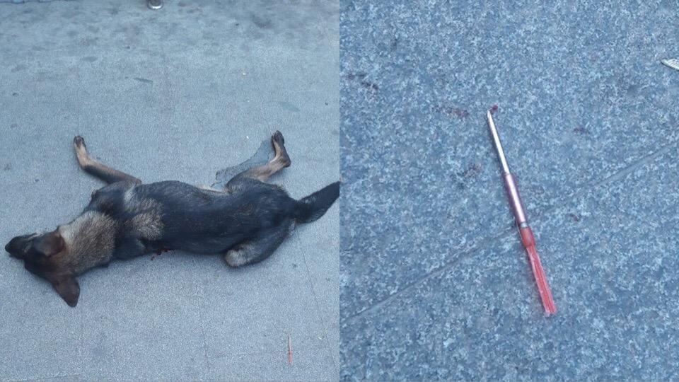 «Собака истекала кровью, дрожала и скулила от боли»: Жительница Башкирии по дороге на работу потрясло ужасное зрелище