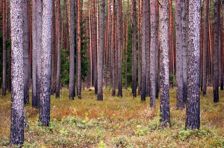 В Заларинском районе осудили черных лесорубов за хищение на 1,4 миллиона рублей