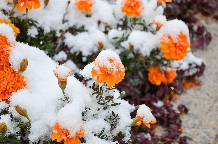 Небольшой снег ожидается ночью 7 октября в Иркутске