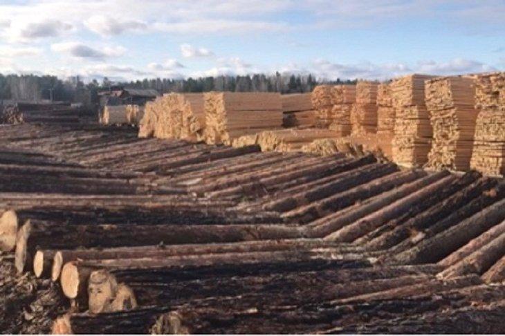 В Зиминском районе задержали банду за вырубку леса на 10 миллионов рублей