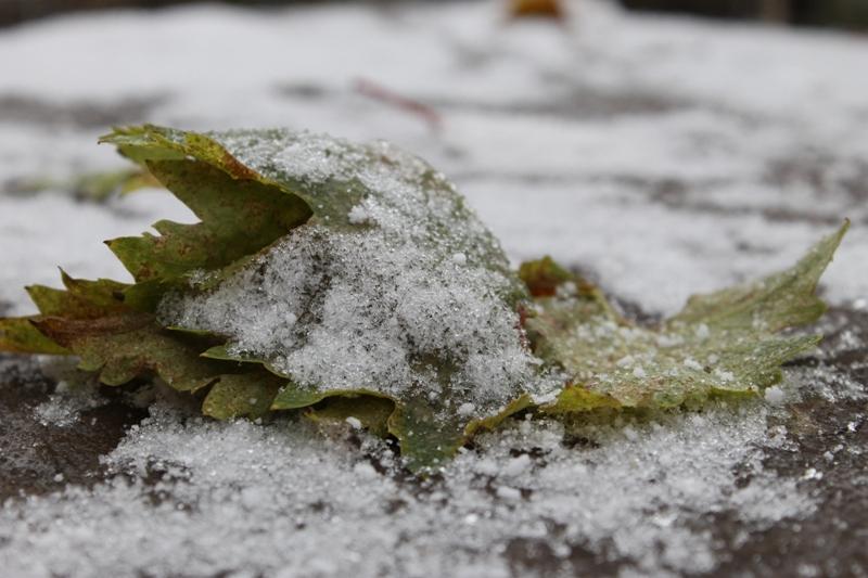 Стало известно, какая часть дорожной техники в Уфе готова к зиме
