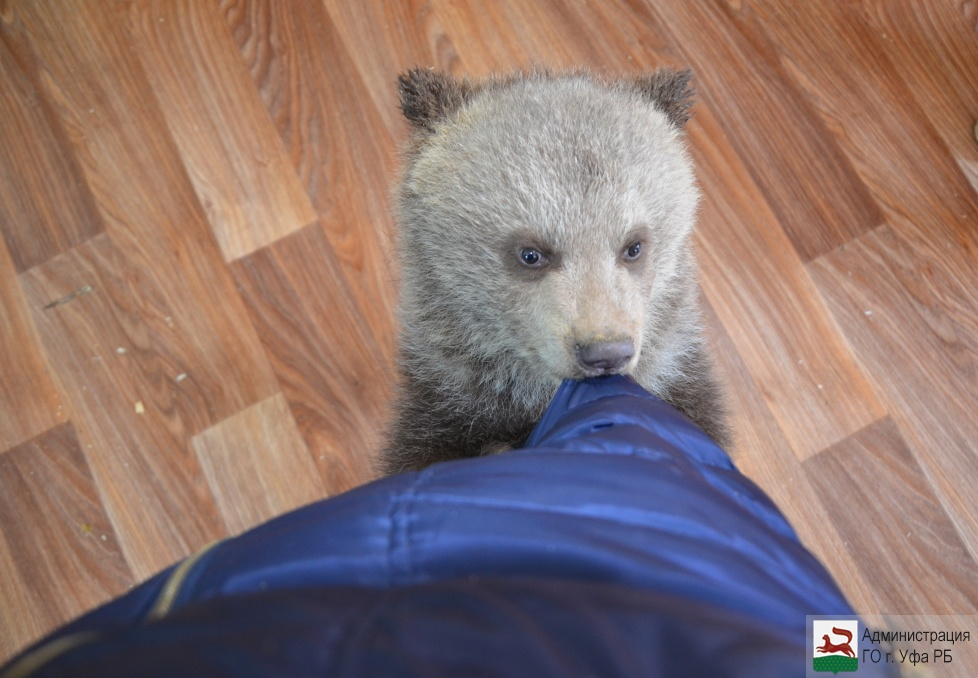 В Башкирии в лесопосадке около дороги заметили медведя