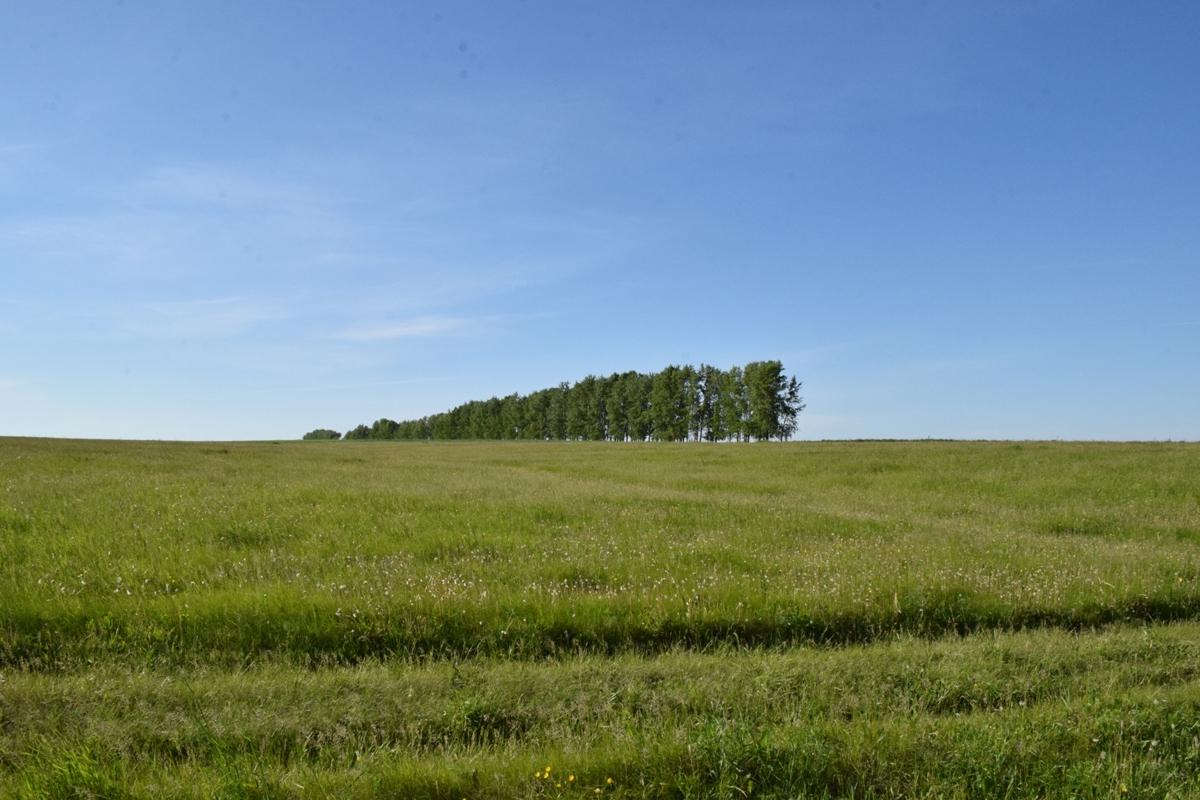 В Башкирии сотрудница сельсовета незаконно продала земельный участок