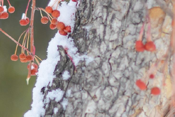 Небольшой снег ожидается в Иркутске 5 ноября
