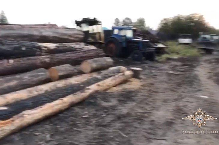 В Иркутской области задержали банду черных лесорубов за вырубки на восемь миллионов рублей
