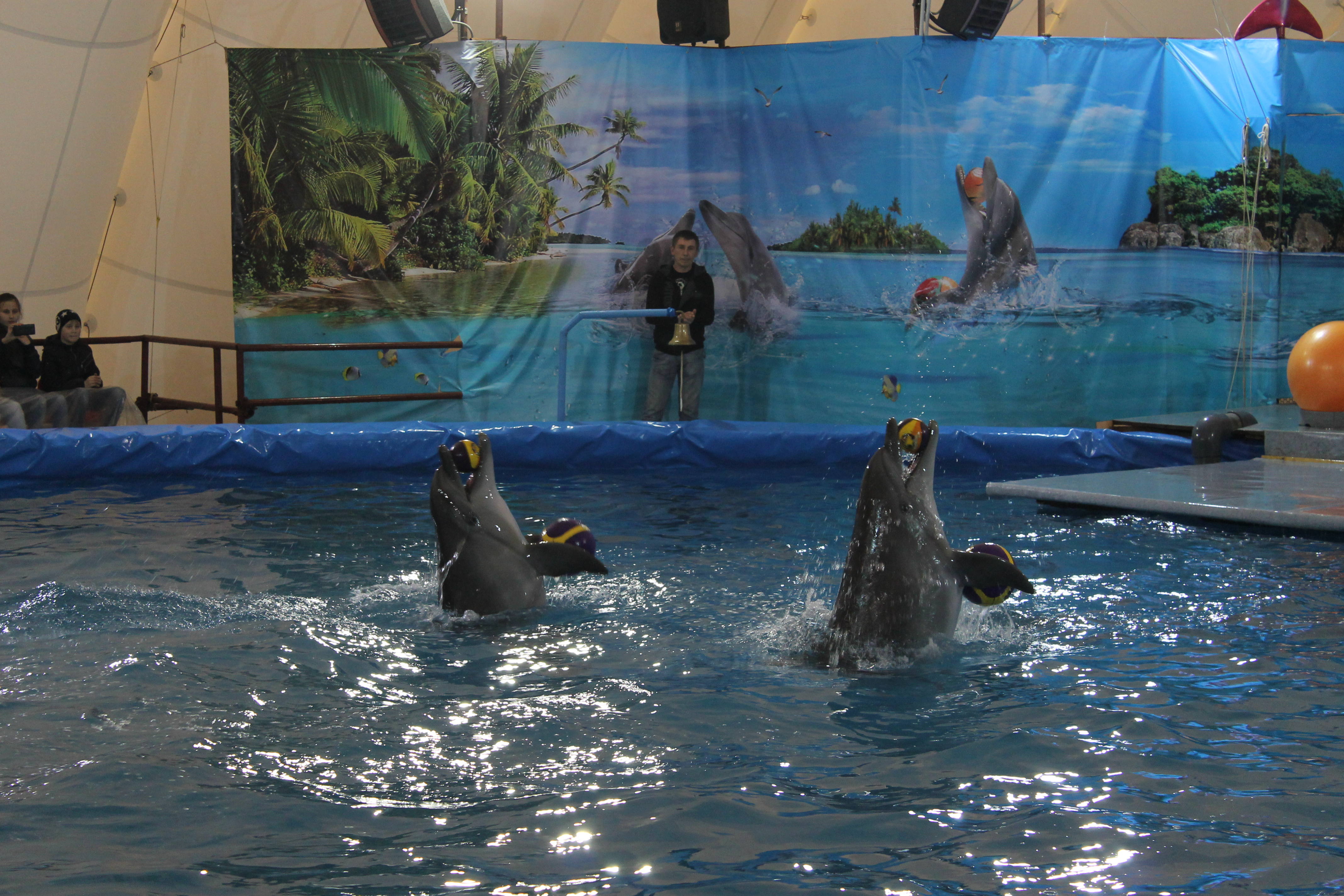 «Они должны жить на воле», «Это просто преступление», «Одумайтесь, люди!»: Как уфимцы отреагировали на мнение Ульфата Мустафина о возможном строительстве дельфинария