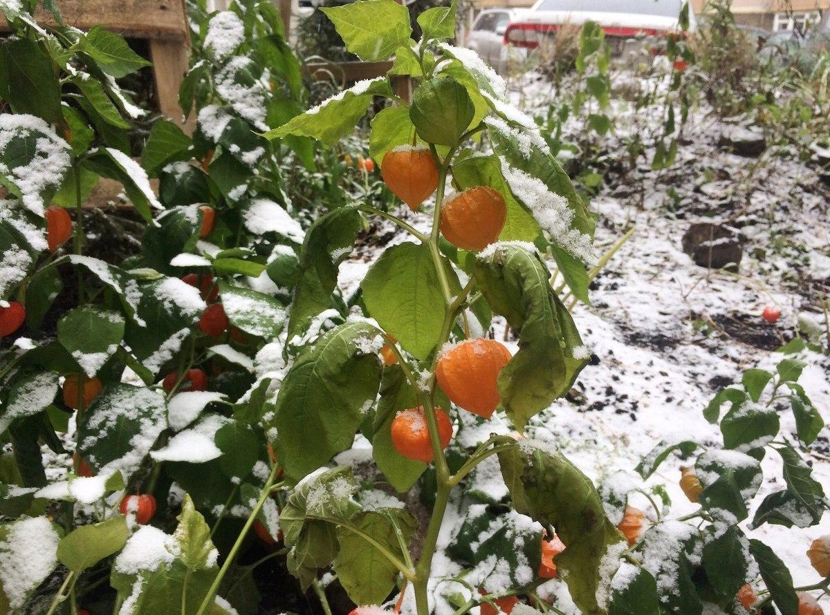 Погода в Уфе на вторник, 12 ноября 2019 года