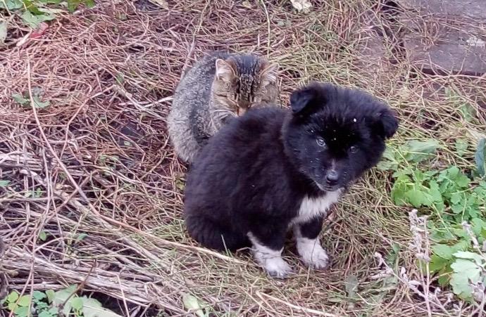 Друг в беде не бросит: Жительница Уфы рассказала печальную историю о забытых в саду котенке и щенке