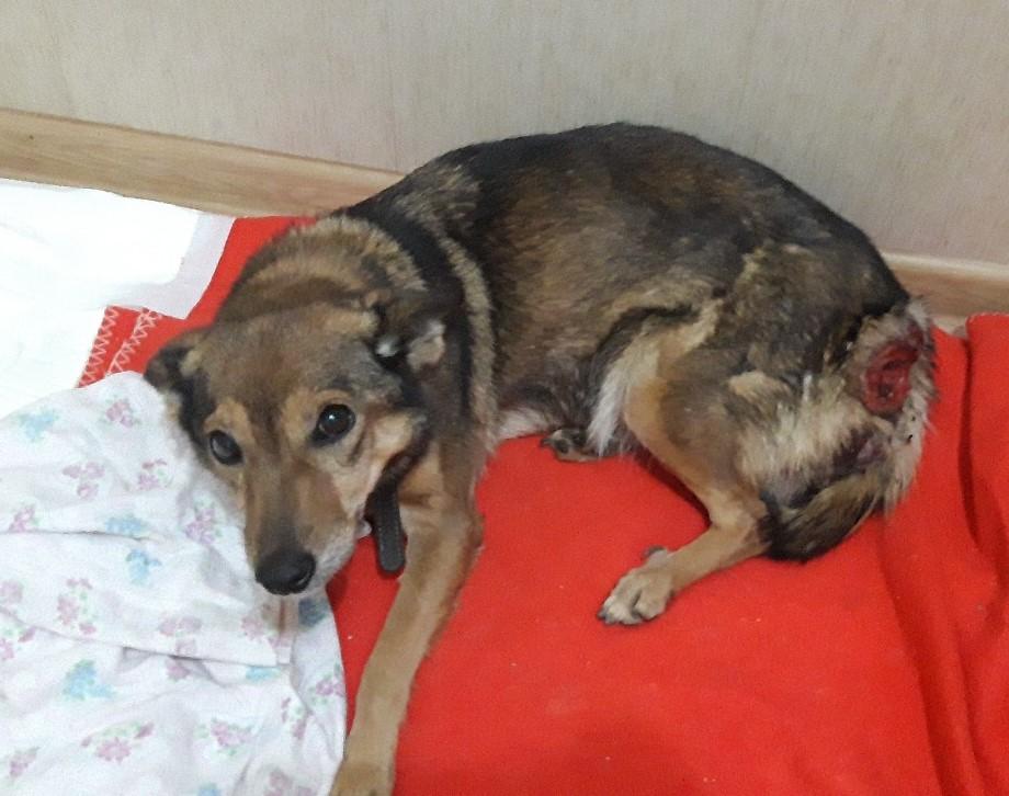 Волонтеры из Уфы просят помочь бездомной собаке с огромной раной